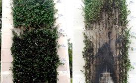 Begrünte Fassaden aus brandschutztechnischer Sicht